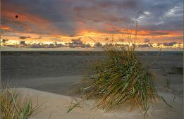beach and dunes postcard