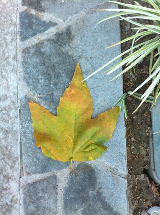 leaf at st josephs by ashley lyn
